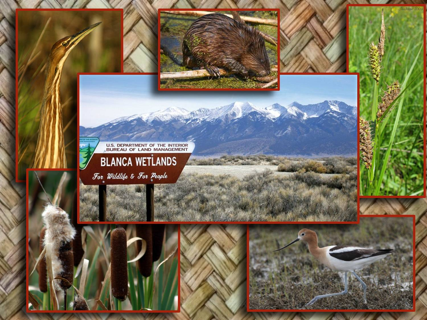 blanca wetlands graphic